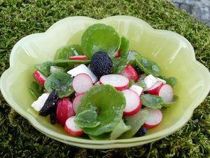 C 39 est le printemps broutons la garrigue et le nombril - Peut on manger les olives piquees par la mouche ...