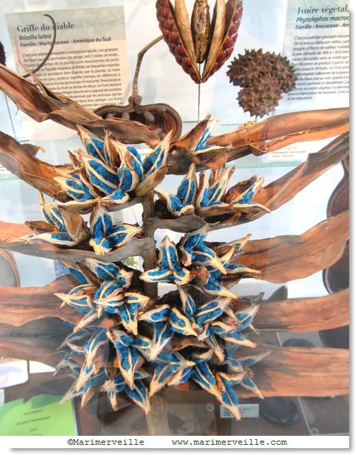 L'arbre du voyageur - Marimerveille