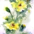 Fleurs et boutons