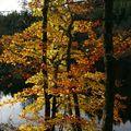 automne auvergne x