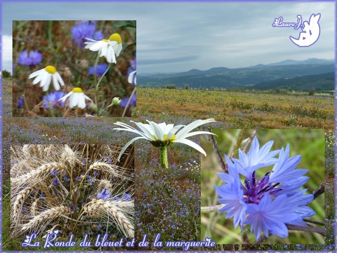 Ronde ete 2014 bleuet et marguerite