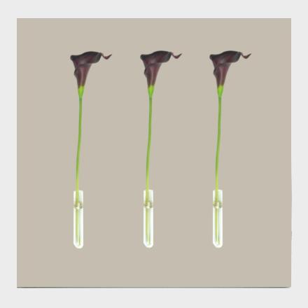 tableau atelier fleur de mai