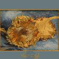 Van Gogh les tournesols couchés