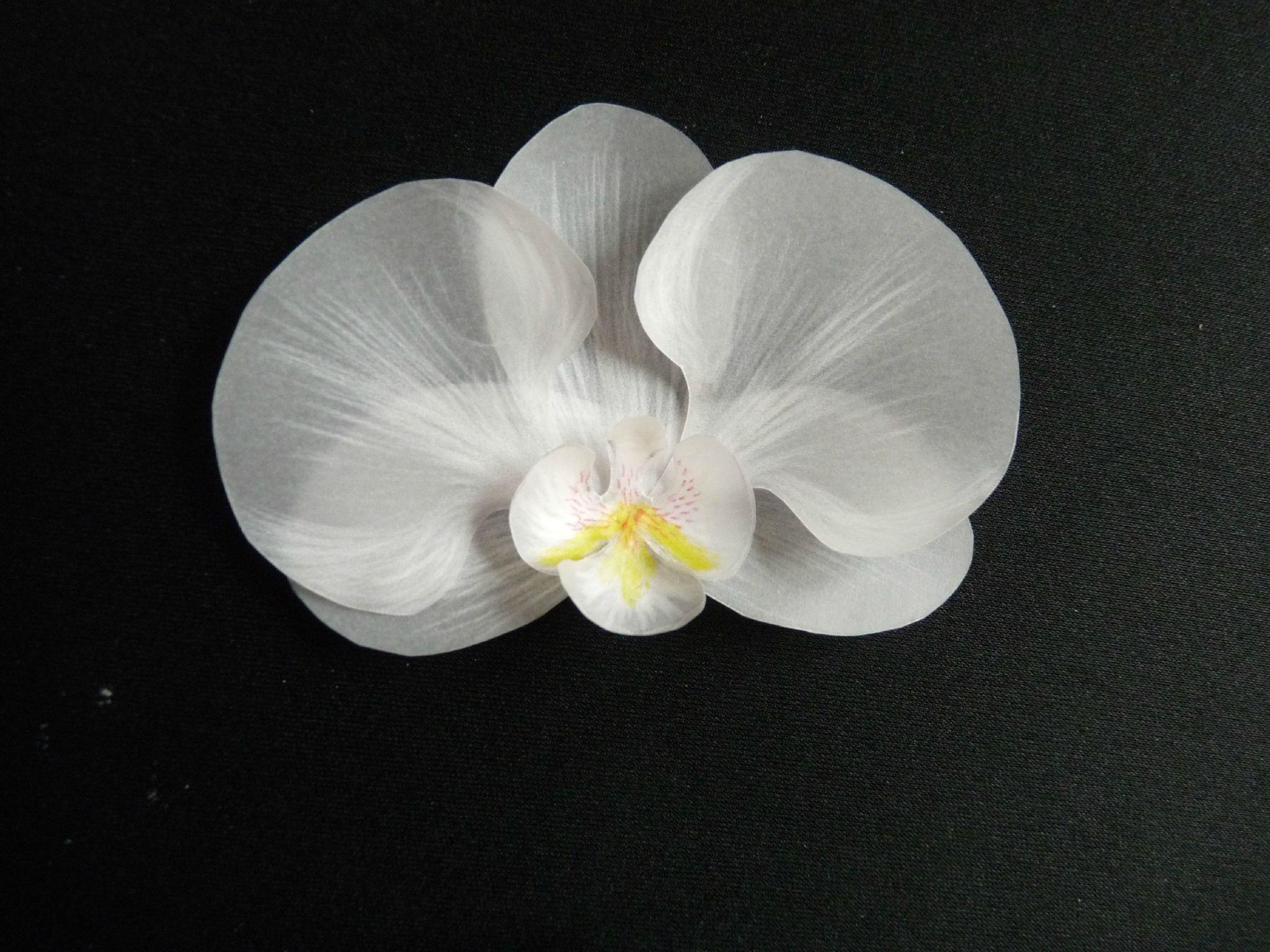 orchid e en papier pergamano les tr sors de sophie du