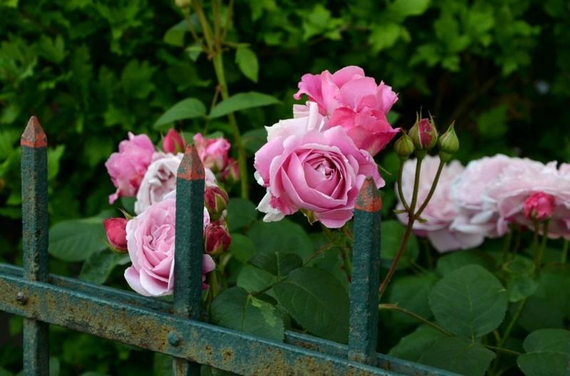 rendez-vous-jardin-normandie©Pixabay-854x565
