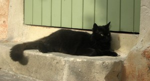 chat_noir_GP_porte_verte_image_long
