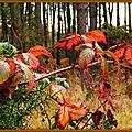 Feuilles orangées et pins