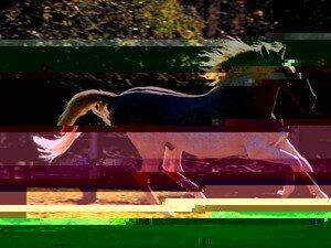 chevaux_72