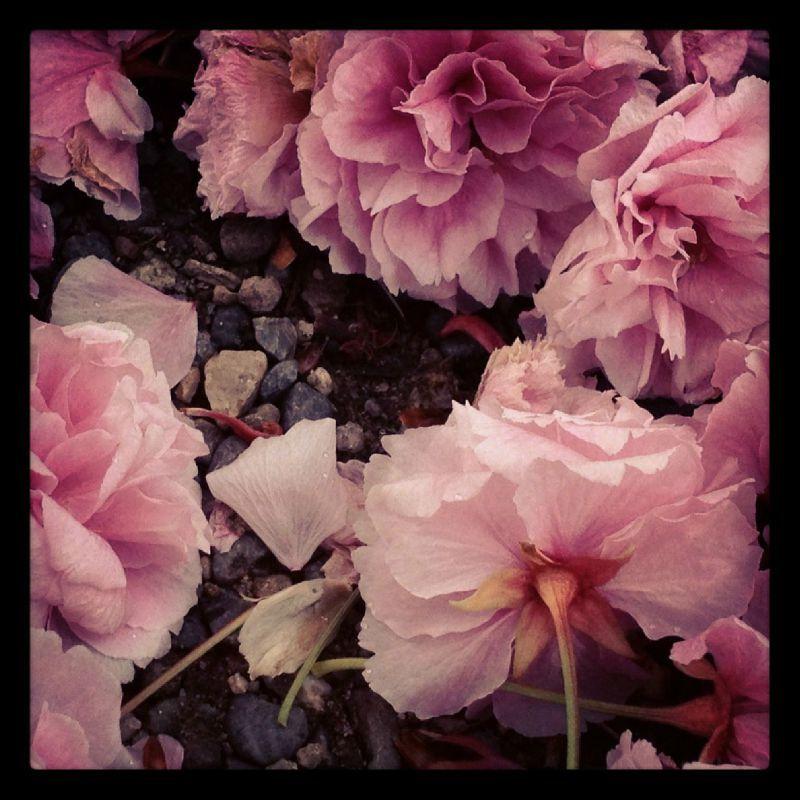 Photo 03-05-2012 18 40 23