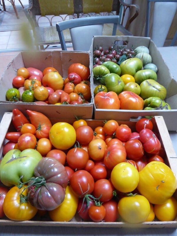 22-tomates (4)