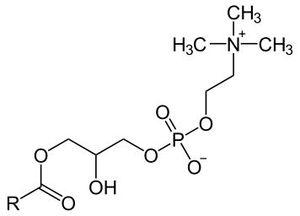 lysolecithine