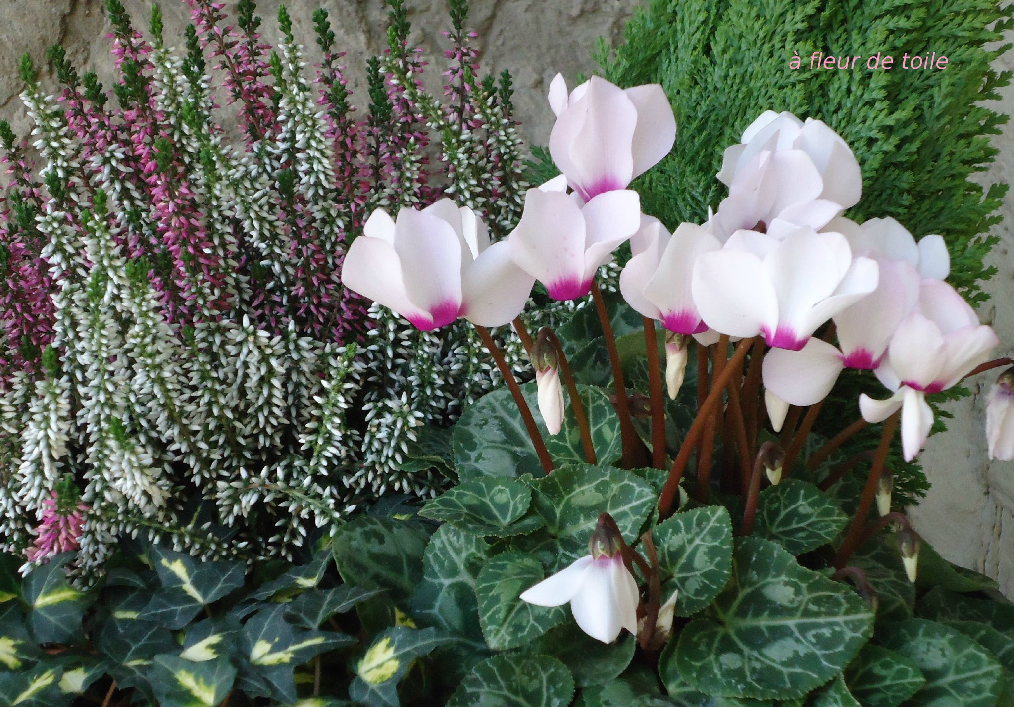 bonjour avec ces roses fleurs amiti je viens vous souhaiter un bon samedi et bons. Black Bedroom Furniture Sets. Home Design Ideas
