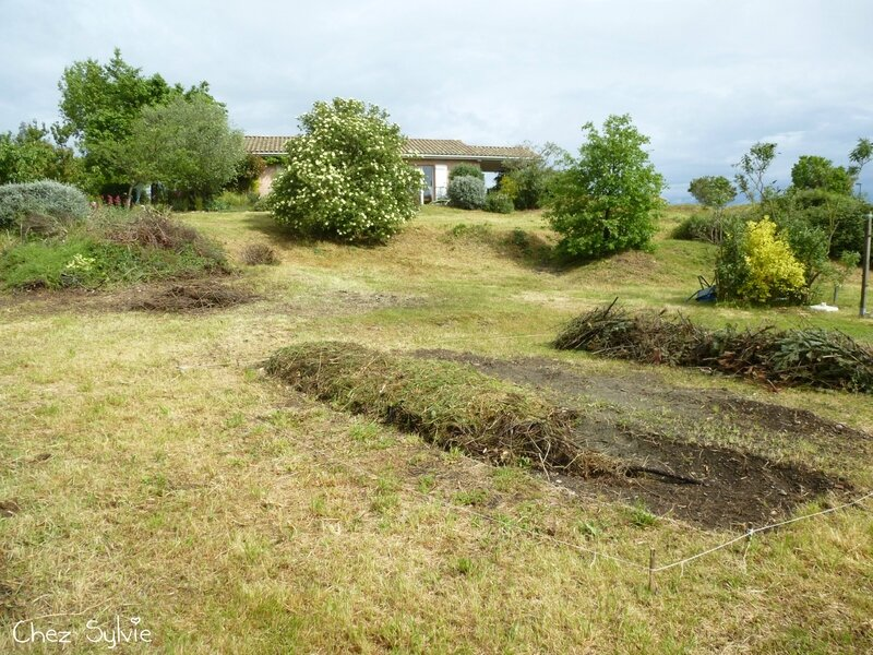 Potager permaculture 14