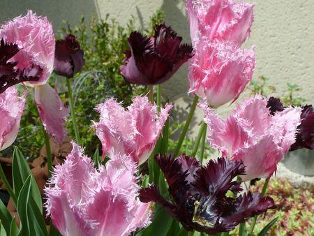 jardin (6)