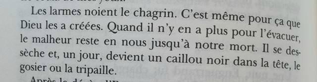 belle d amour 160