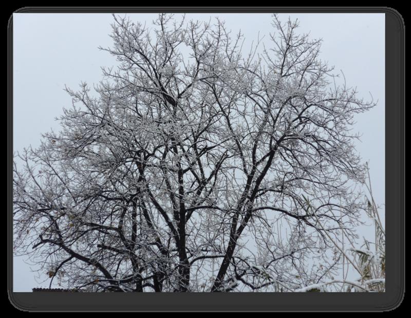 arbre neige 2018