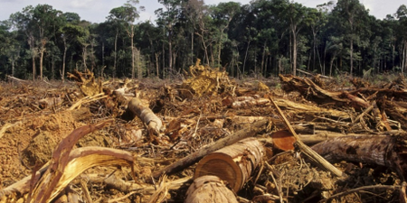 1382_1359_Deforestation_Amazon_1024x667_1_460x230