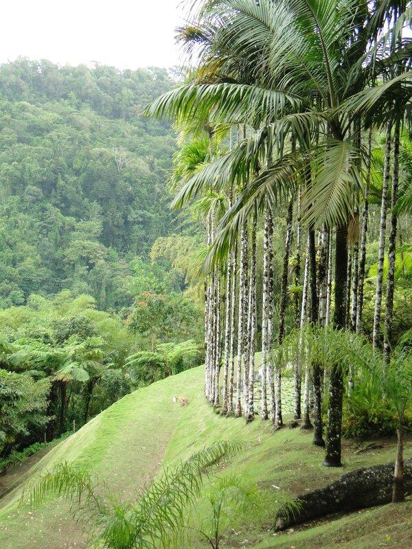 Martinique Avril 2014 081