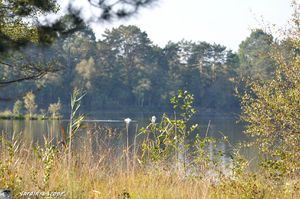 Végétation du bord de l'étang