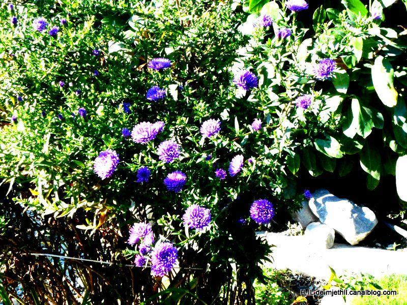 16-Fleurs 05-10-2012 024