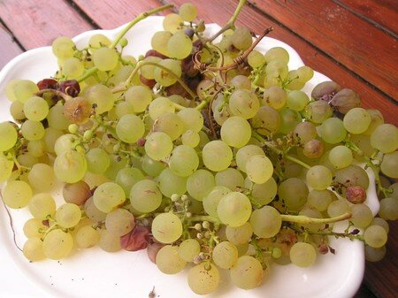 vendanges_tardives_1