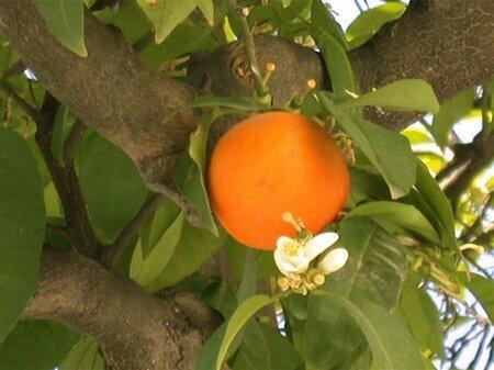 Orange_msq_Cordoba