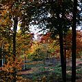IMG_7058R5 Bois de la Houssière
