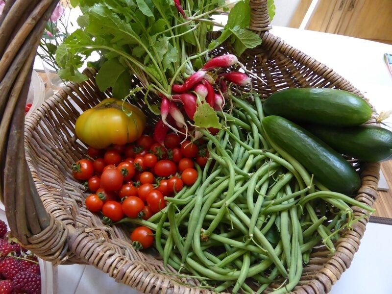 17-tomates, haricots, concombres, radis,