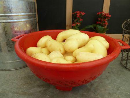 05-premières patates nouvelles amandine (7)