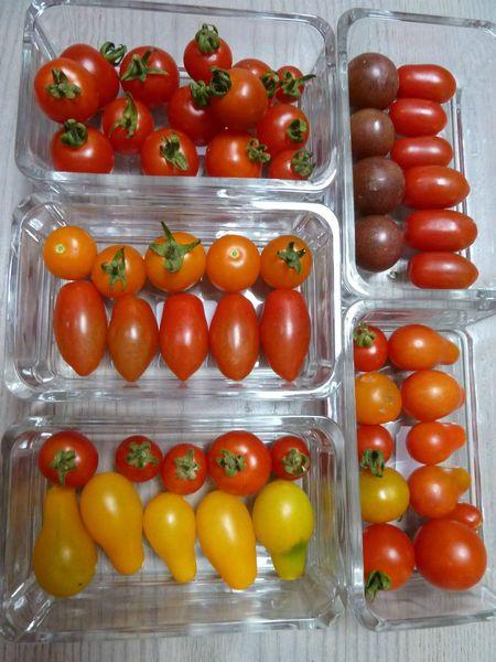 23-tomates cerises (3)