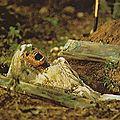 Le vaudou du plus grand marabout medium gbeto du monde
