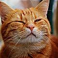Pourquoi mon chat ronronne