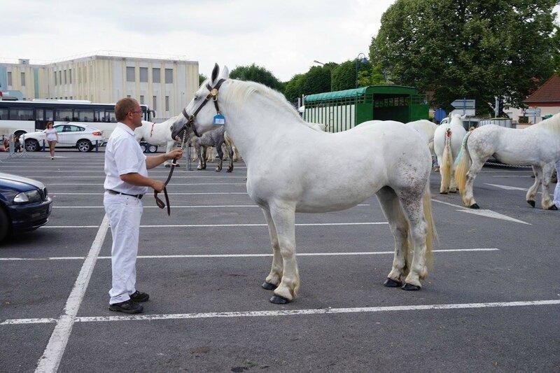 Etoile du Flayet - 17 Juin 2017 - Concours élevage local - St Pol sur Ternoise (62) - 1ere (3 ans)