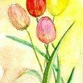 Sages tulipes