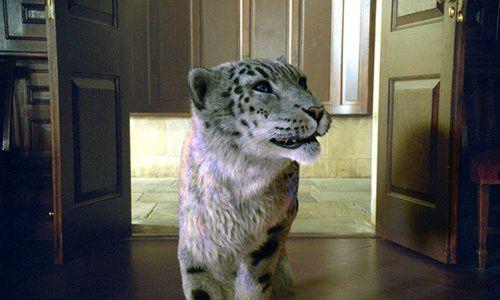 tigre-la-boussole-d-or_jpg_500x630_q95