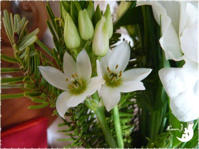 Bouquet 1er an 2015 AlbertMichelle 8