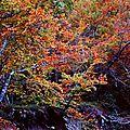 l'automne en pastel
