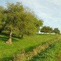 verger-automne-09