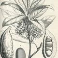 Binger botaniste
