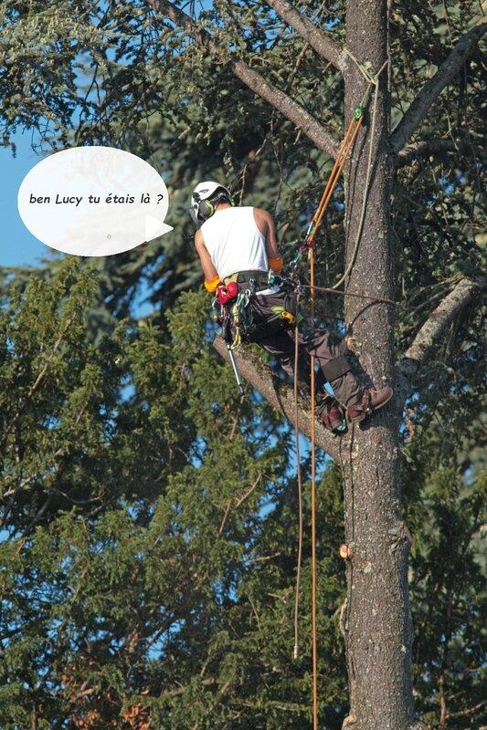 ville worker tronçonnage arbre 4 300816 Lucy