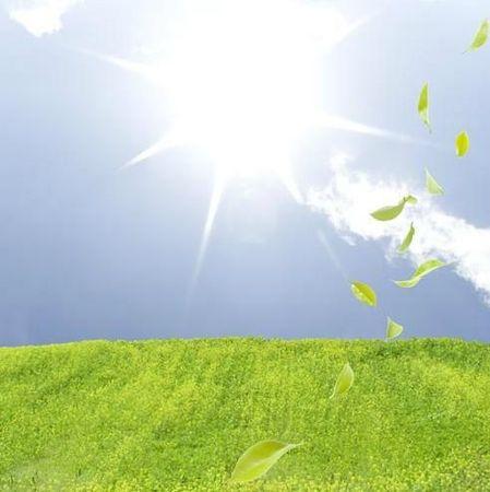 herbe-verte-et-feuilles