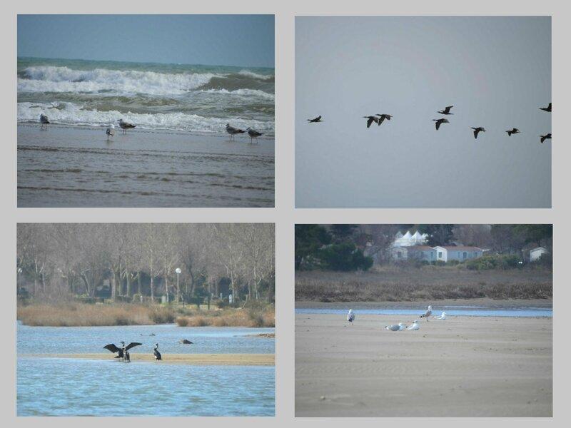 11 oiseaux 1