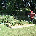 Jardin en carrés le 23 juin.