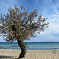 Tamaris on the beach