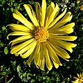 fleurs-ville (15)