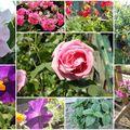 Un jardin tout fleuri !