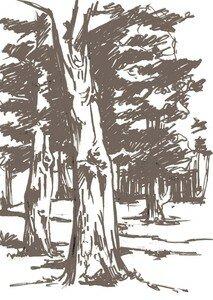 arbres_r_sidence