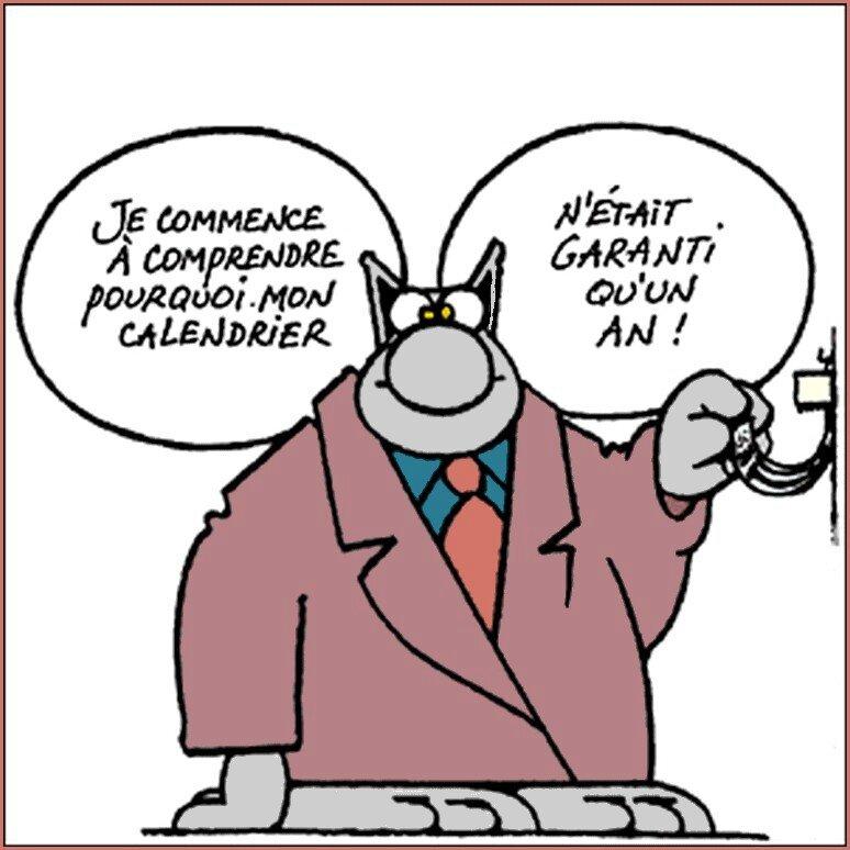 chat amical sans inscription Corbeil-Essonnes