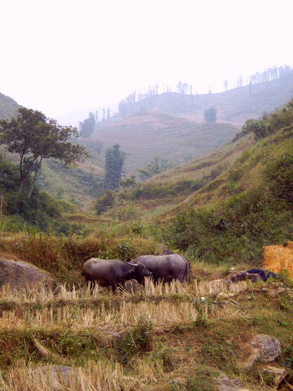 vietnam 2005 16