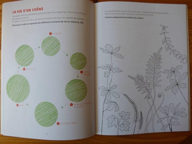Colibris arbres (1)